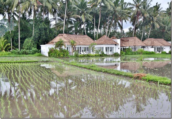 Rice Terrace Villa Ubud