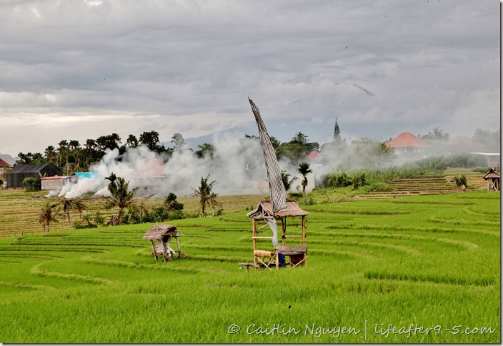 Bali - Canggu Rice Fields