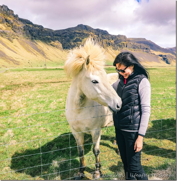 Woman playing with Icelandic horses